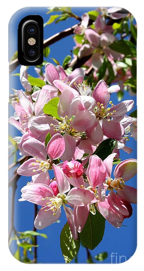 Weeping Cherry Tree Blossoms IPhone X Case featuring the photograph Weeping Cherry Tree Blossoms by Carol Groenen