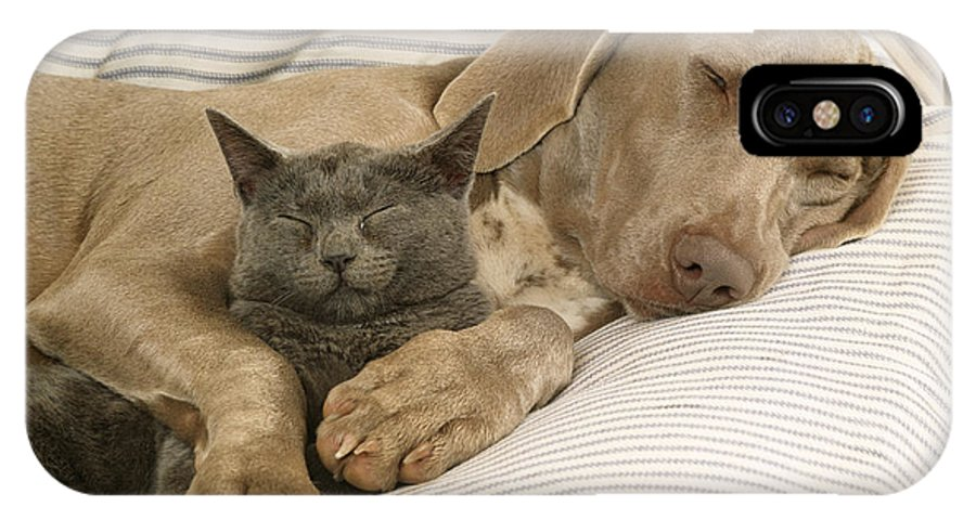 Weimaraner IPhone X / XS Case featuring the photograph Weimaraner Asleep With Cat by John Daniels