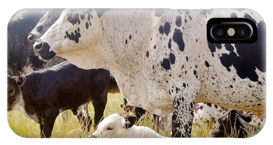 Black And White; Cows; Watching Out; Calf's; Meadow; South Africa; Swartland; Animals; Farmland; Farm Animals; IPhone X Case featuring the photograph Well Looked After by Werner Lehmann