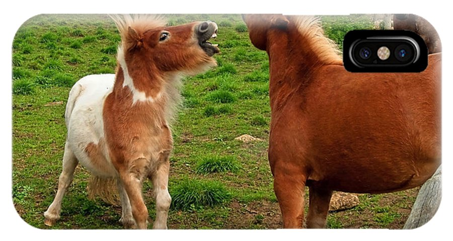 Abbotsbury IPhone X Case featuring the photograph We're Just Horsing Around by Susie Peek