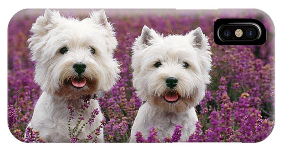 West Highland Terrier IPhone X / XS Case featuring the photograph West Highland Terrier Dogs In Heather by John Daniels