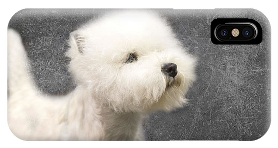 Westie IPhone X Case featuring the photograph Westie by Rebecca Cozart