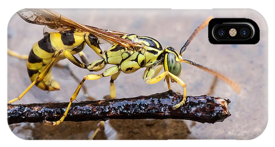 Aggressive IPhone X Case featuring the photograph Wet Wasp by Craig Lapsley