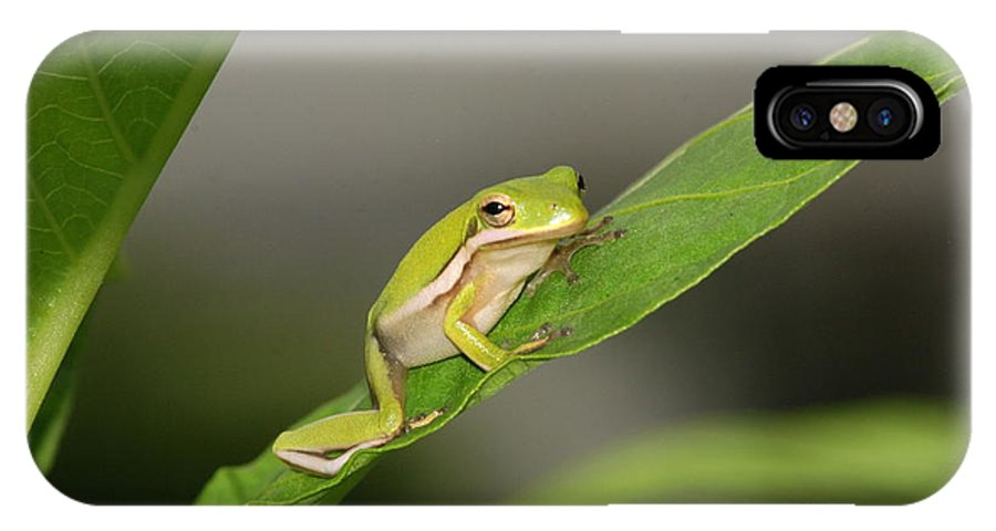 Tree Frog IPhone X Case featuring the photograph What Are You Waiting For by Kathy Gibbons