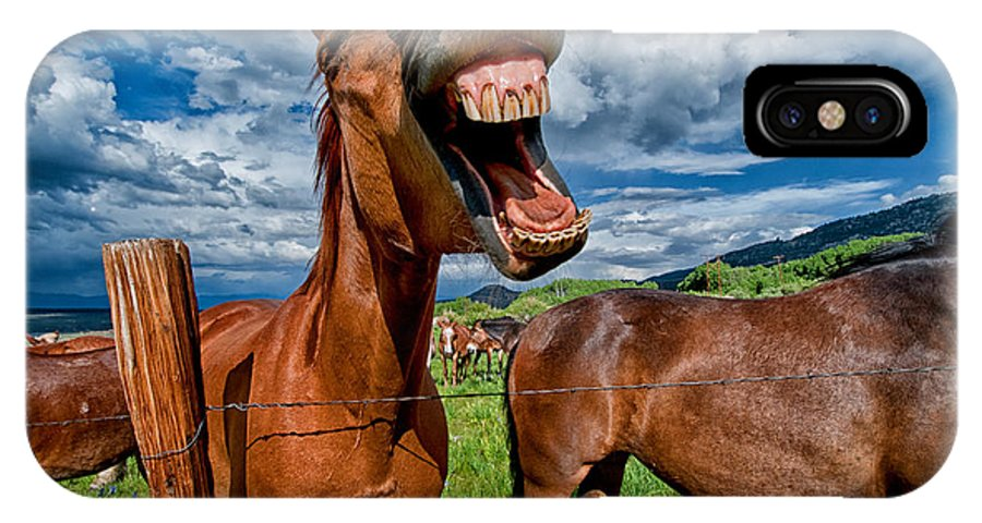 Horse Mule Teeth Funny Laugh Animal Equine California Blue Sky Cloudy Grass Green Mouth Cowboy Day IPhone X Case featuring the photograph What's So Funny by Cat Connor