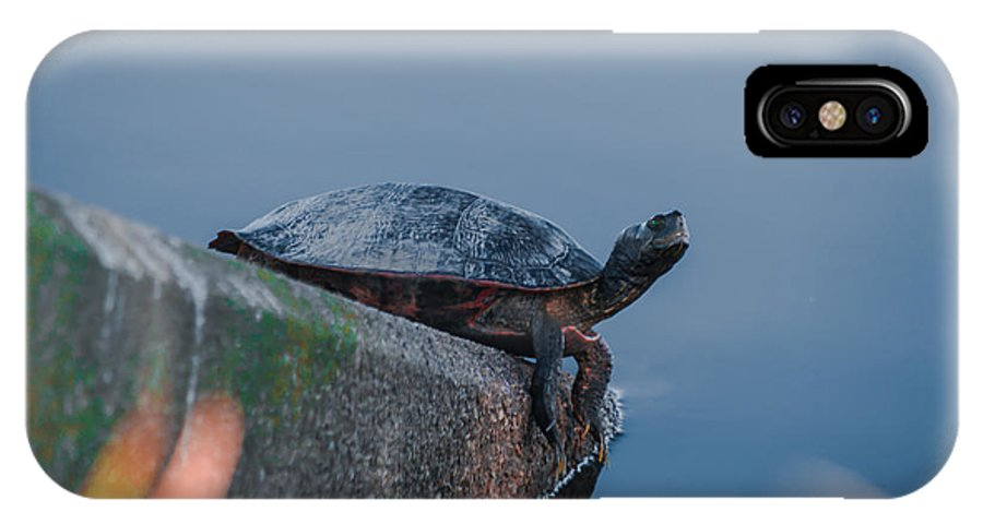 Turtle IPhone X Case featuring the photograph What's Up by Scott Hervieux