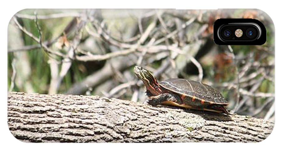 Painted Turtle IPhone X Case featuring the photograph Whatya Doing by Sue Chisholm