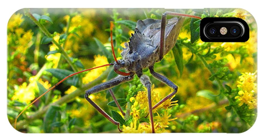 Assasin Bug Wheel Bug Natural Science Preservation Meadow Habitat Conservation Rare North American Insects Predatory Insects Insect Nightmare True Bug Forest Creatures Meadow Creatures Maryland Insects Spike Backed Insect Stinging And Biting Insects Valuable Ecological Resource Naturalist Nature Photography Wildlife Habitat Lifeform Alive Living Being All Creatures Great And Small Macro Photography Images Razor Backed Insects IPhone X / XS Case featuring the photograph Wheel Bug by Joshua Bales