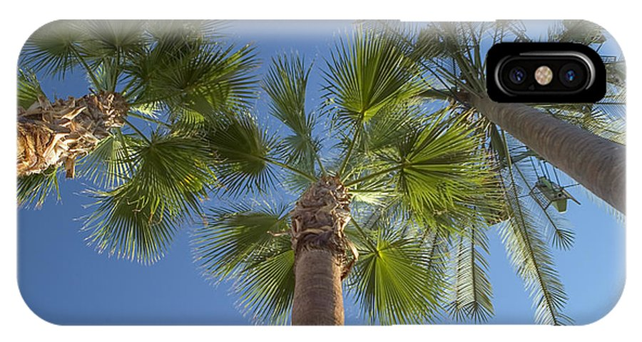 Palm Trees IPhone X Case featuring the photograph Which One Doesnt Belong 2 by Scott Campbell