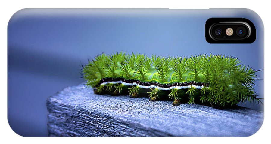 Catapillar IPhone X Case featuring the photograph Which Way To Go? by Trish Mistric