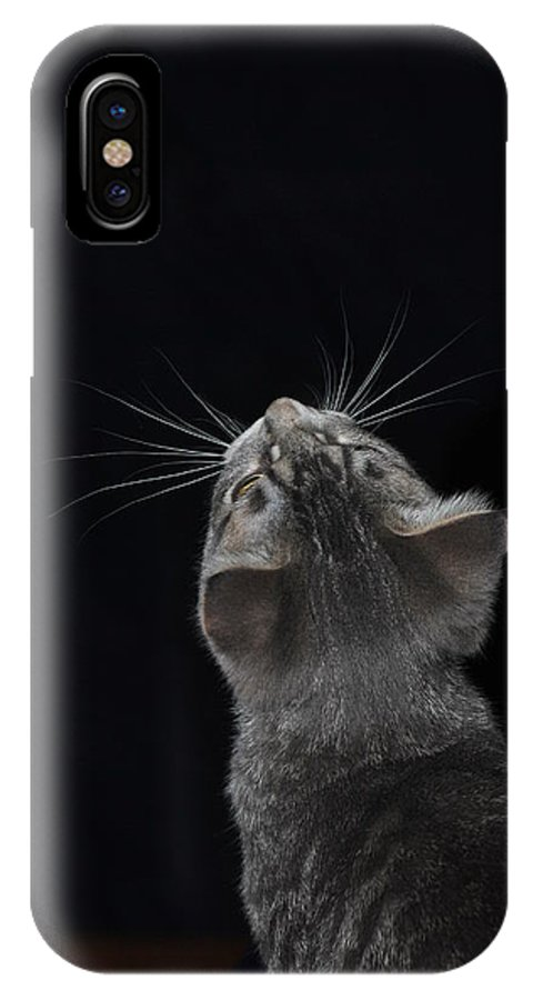 Cat IPhone X Case featuring the photograph Whiskers by Ronald Nunes