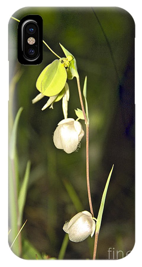 Wildflowers; Globes; Nature; Green; White IPhone X Case featuring the photograph Whispers by Kathy McClure