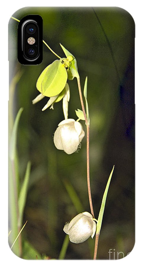Wildflowers; Globes; Nature; Green; White IPhone X / XS Case featuring the photograph Whispers by Kathy McClure