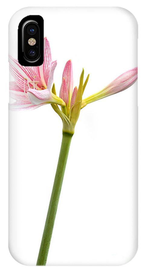 White IPhone X Case featuring the photograph White Amaryllis Flower by Antoni Halim