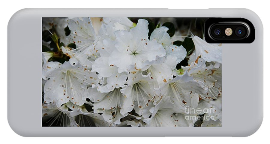 Floral White Flower Azalea Bermuda Flora Wedding Card Wedding Gift Nature Greeting Card Birthday Card Sympathy Card Canvas Print Metal Frame Poster Print Available On Phone Cases Throw Pillows Pouches Duvet Covers Tote Bags Weekender Tote Bags Shower Curtains And T Shirts IPhone X / XS Case featuring the photograph White Azaleas In Bermuda by Marcus Dagan