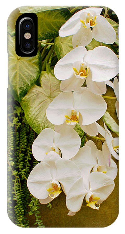 Orchard IPhone X Case featuring the photograph White Blooming Trail by Lauren Simon
