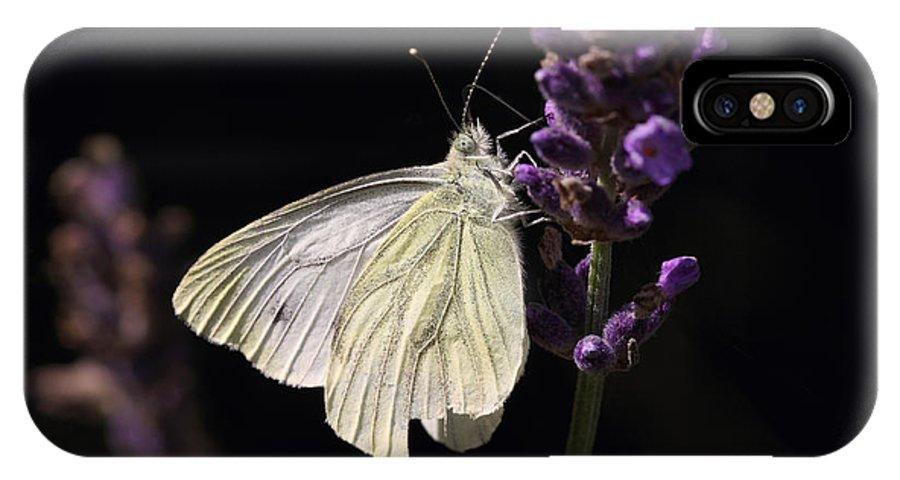 Hjbh IPhone X Case featuring the photograph White Butterfly On Lavender Against A Black Background by LHJB Photography