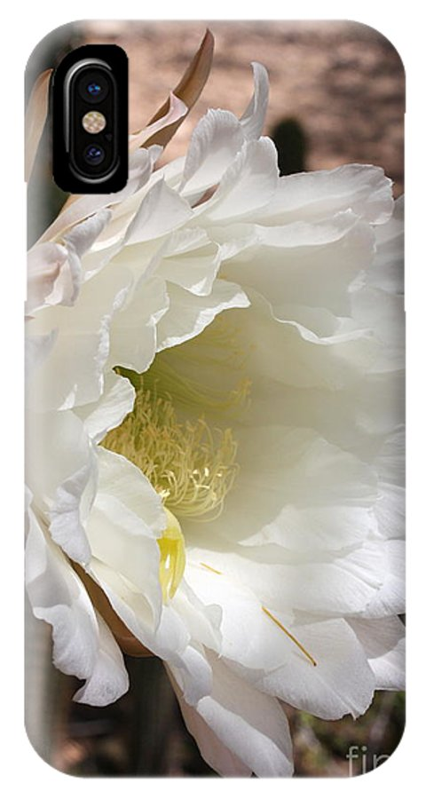Cactus Flower IPhone X Case featuring the photograph White Cactus Bloom by Carol Groenen