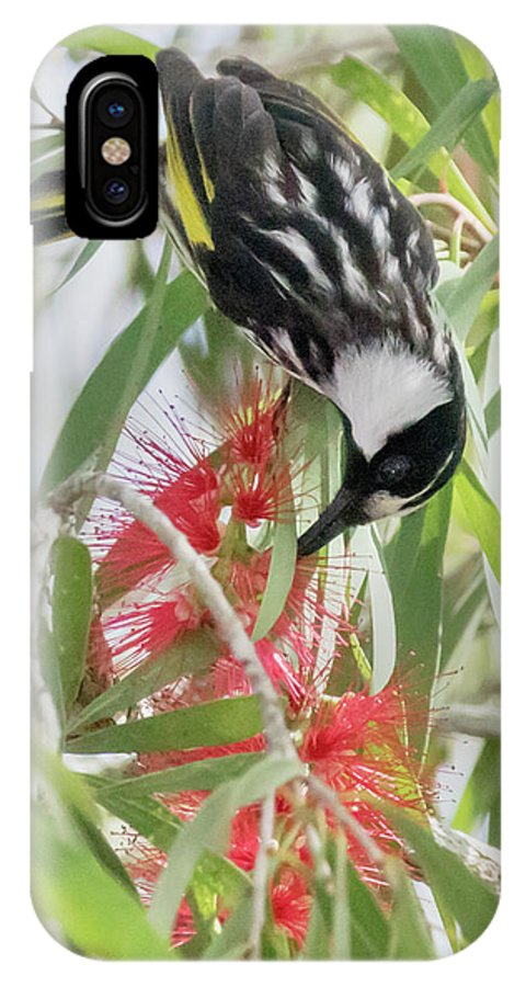 Nature IPhone X Case featuring the photograph White-cheeked Honeyeater Feeding by Hal Beral
