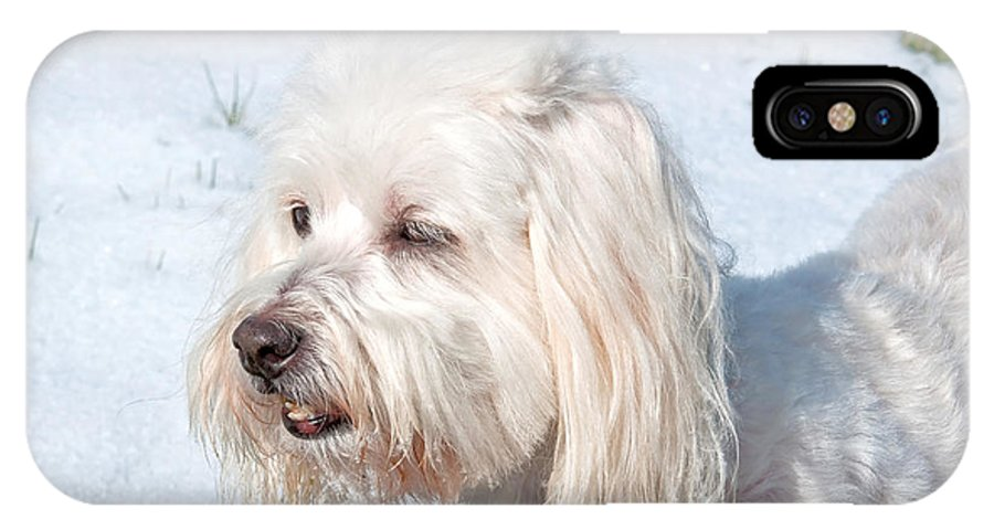 Dog IPhone X Case featuring the photograph White Coton De Tulear Dog In Snow by Valerie Garner