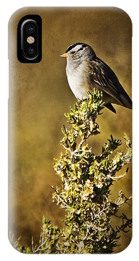 White-crowned Sparrow IPhone X Case featuring the photograph White-crowned Sparrow by Priscilla Burgers