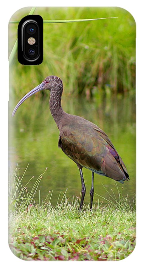 White-faced Ibis IPhone X / XS Case featuring the photograph White-faced Ibis 2 by Bob and Jan Shriner