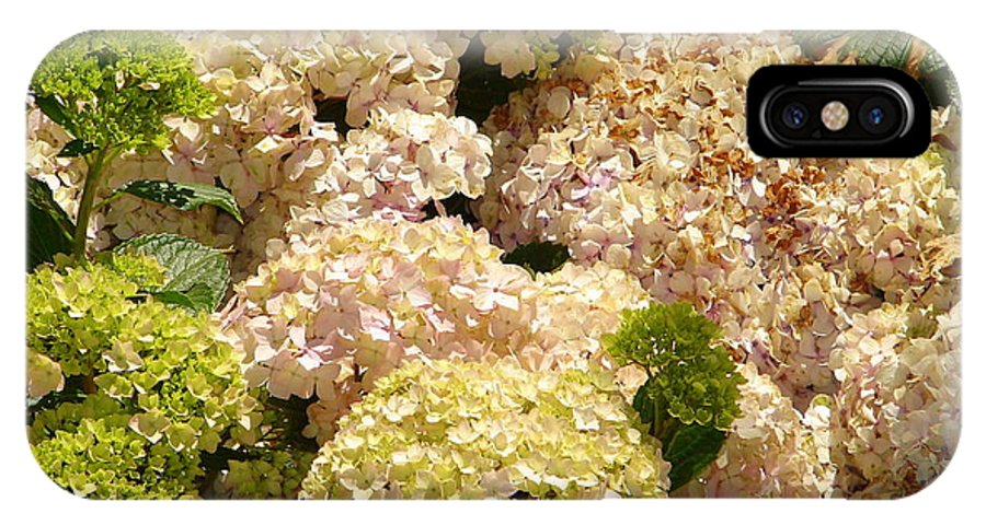 Flower IPhone X Case featuring the photograph White Hydrangea by Lew Davis