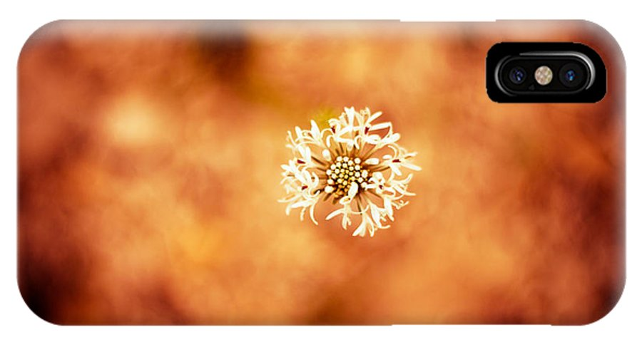 Art IPhone X Case featuring the photograph White On Orange by Darryl Dalton