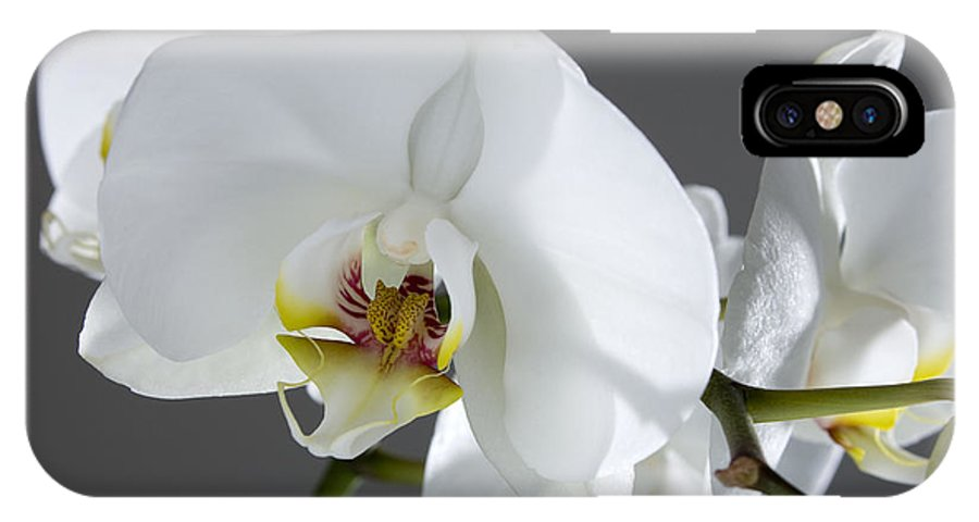White Orchids On A Grey Background IPhone X Case featuring the photograph White Orchid 1b by Mauro Celotti