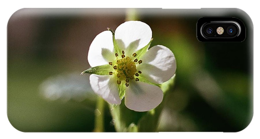 White Flower IPhone X Case featuring the photograph White Peddals by Stephanie Gavin