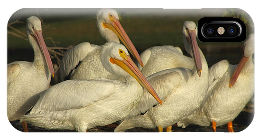 White Pelicans IPhone X Case featuring the photograph White Pelicans by Diana Haronis