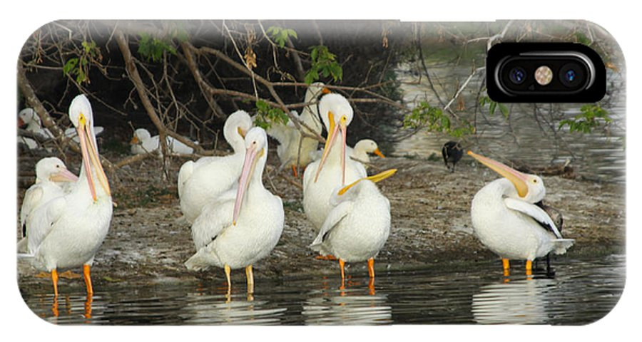 White Pelicans IPhone X Case featuring the photograph White Pelicans Grooming by Diana Haronis