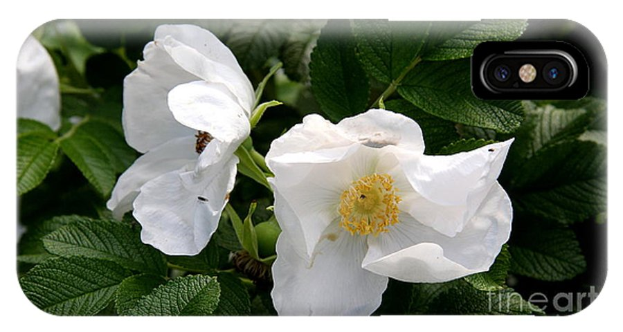 White Roses IPhone X Case featuring the photograph White Roses by Christiane Schulze Art And Photography