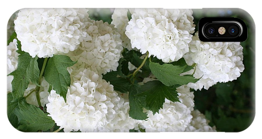 White Snowball IPhone X Case featuring the photograph White Snowball Bush by Christiane Schulze Art And Photography