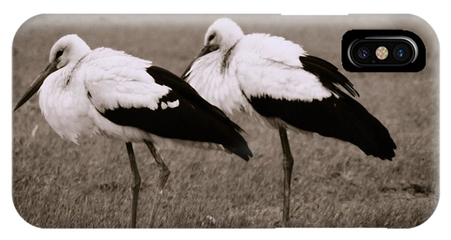 Stork IPhone X Case featuring the photograph White Storks by Gabriela Insuratelu
