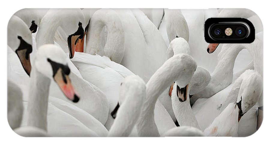 Animal IPhone X Case featuring the photograph White Swans by Ron Koeberer