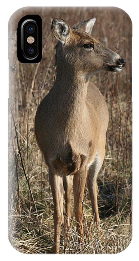 White-tail IPhone X Case featuring the photograph White-tail Doe by Roger Look