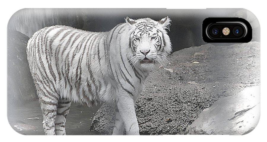 Tiger IPhone X Case featuring the photograph White Tiger by Dyle  Warren