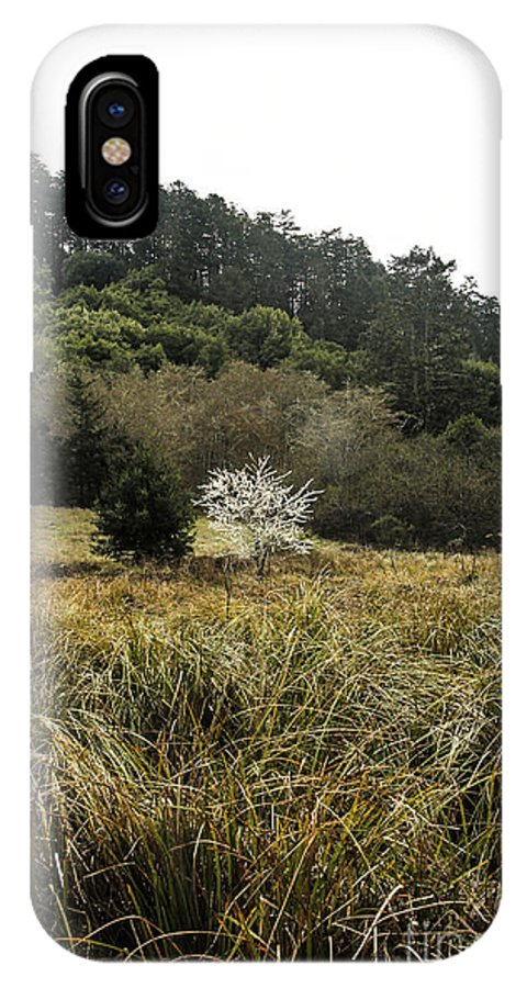 Tree IPhone X Case featuring the photograph White Tree by Tim Tolok