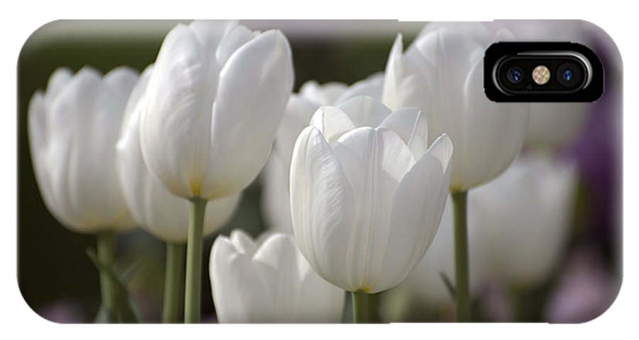 Tulips IPhone X Case featuring the photograph White Tulips 9169 by Terri Winkler