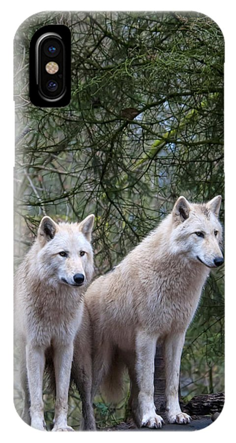 White IPhone X Case featuring the photograph White Wolf Pair by Mark Newman