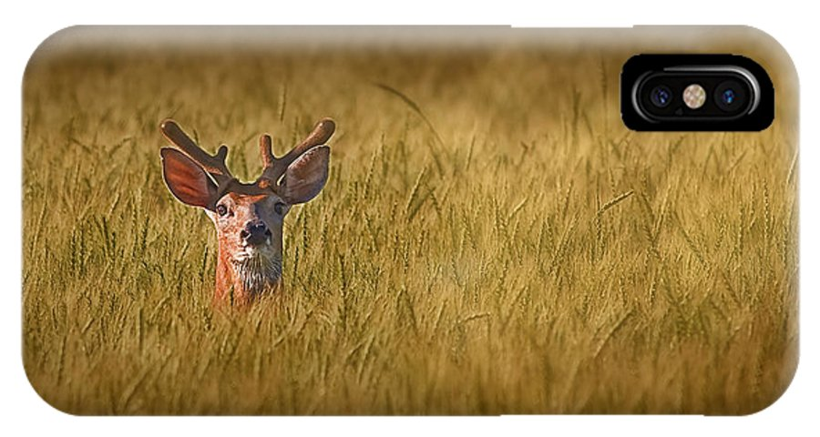 Deer IPhone X Case featuring the photograph Whitetail Deer In Wheat Field by Tom Mc Nemar