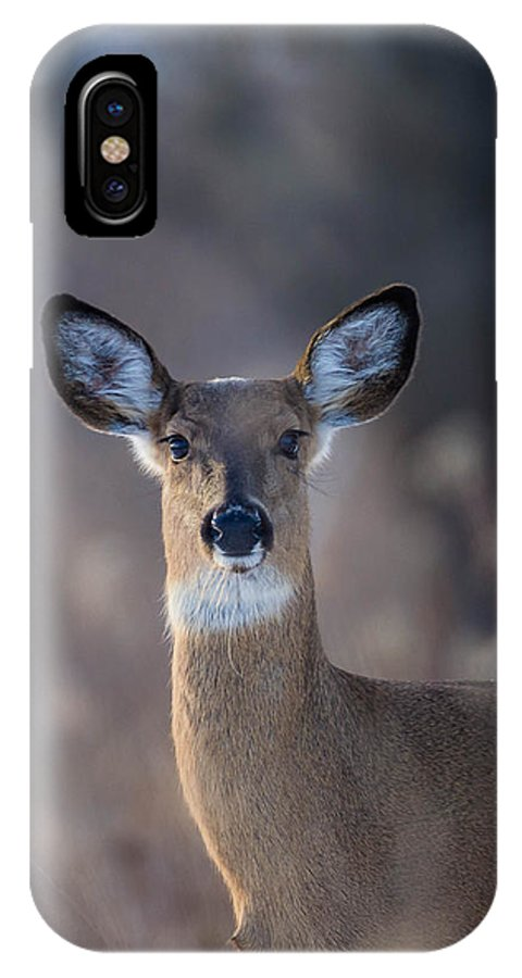 Whitetail Deer IPhone X Case featuring the photograph Whitetail Doe by Nathan Harker