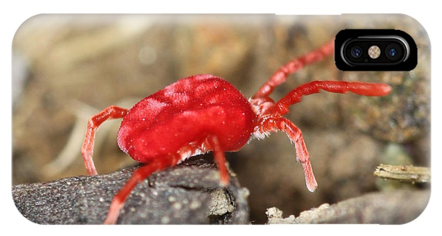 Red Sox. Red Velvet Mite IPhone X Case featuring the photograph Who Needs The Red Sox? by John Flannery