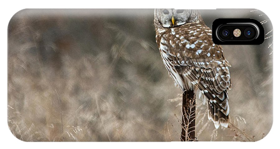 Owl IPhone X Case featuring the photograph Whooo Goes There by Linda Shannon Morgan