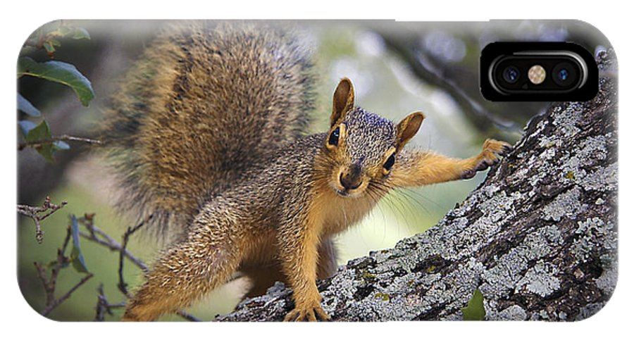 Squirrel IPhone X Case featuring the photograph Who's Watching Who? by Ben Lavitt