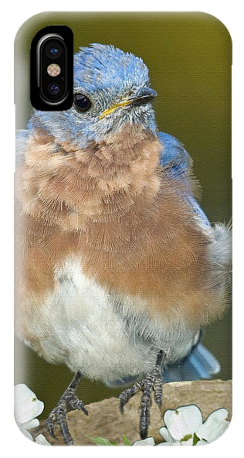 Birds IPhone X Case featuring the photograph Why Be Mad by Helen Ellis