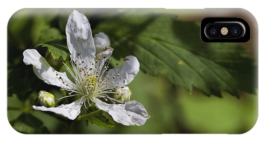 Sawtooth Blackberry IPhone X Case featuring the photograph Wild Alabama Blackberry Blossom by Kathy Clark