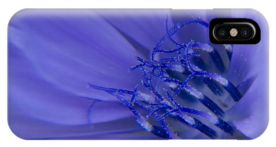 Chicory IPhone X Case featuring the photograph Wild Chicory Macro by Darleen Stry