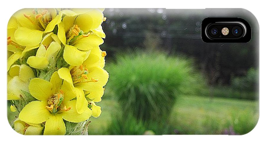 Mullein IPhone X Case featuring the photograph Wild Mullein by MTBobbins Photography